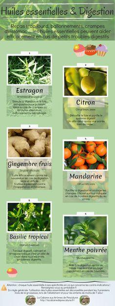 Huiles essentielles et digestion ► Voici quelques huiles essentielles d'usage courant pour soulager ces petites contrariétés / La Cabane aux Arômes de Pescalune