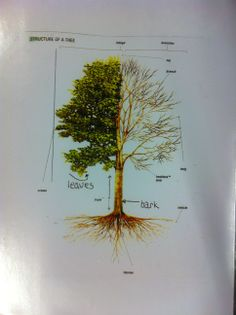 Elements of a tree