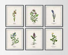 Set of (6) Botanical PrintsEtsy$84