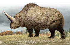 Scientists in Siberia recently discovered the fossilized skull of a 30,000-year-old Elasmotherium sibiricum, a giant horse-like animal that…