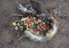 Segundo a Onu, estima-se que haja mais de 100 milhões de toneladas de resíduos nos oceanos e grande parte disso é composto por plástico. Todas as espécies marinhas estão sob risco de extinção. E isso afeta o homem diretamente.