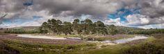 Glen Derry, Cairngorms, Scotland.