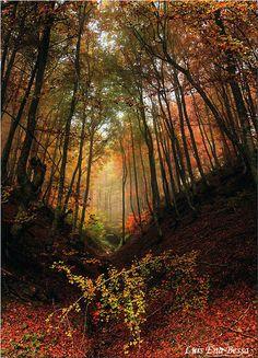 Tener una cabaña en el bosque
