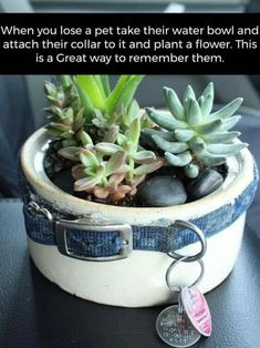 When you lose a pet take their water bowl and attach their collar to it and plant a flower. This is a Great way to remember them. Someone sent it to us and we wanted to SHARE.so many of us have lost our furry family pets ! Animals And Pets, Cute Animals, Pet Remembrance, Pet Loss, Dog Memorial, Memorial Ideas, Cactus Y Suculentas, Pet Memorials, Losing A Pet