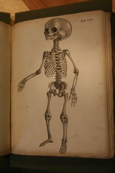 Fyfe, Andrew, The anatomy of the human body... 1830, child skeleton.