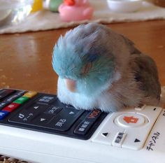 Sleepy birby