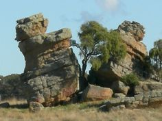 Photo of a Split rock with a tree - can be seen on the way to Dubbo Zoo, NSW Australia.would love to see in person some day. Places To See, Places Ive Been, Walkabout, Natural World, Beautiful Images, Road Trip, Southern, Bucket, Trees