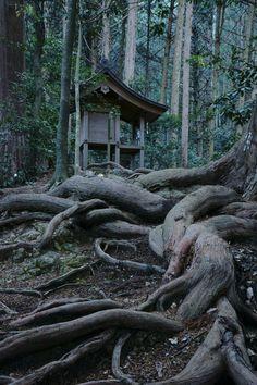 Okuni shrine, Shizuoka, Japan 小國神社