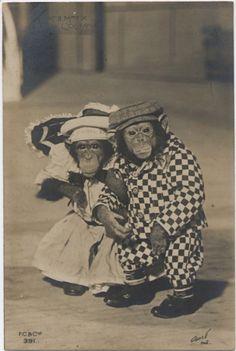 """Circus Chimpanzees """"Mr et Madame X"""", Paris, c. 1905"""