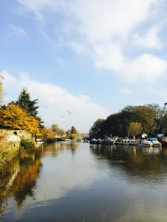 Took a lovely stroll along the river in Twickenham on a lunch break. Beautiful weather! #Twickenham #Thames #Sunny #Warm #November