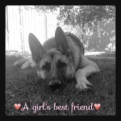 My K9 Partner and my other GSD's have always protected my Wife. Those of them that knew my very ill Father all would enter his home and take up a defensive position by him in his recliner. No one but my Mom, Wife, and myself could get near him. They just knew he needed them to protect him. They would have died protecting him and my wife also.