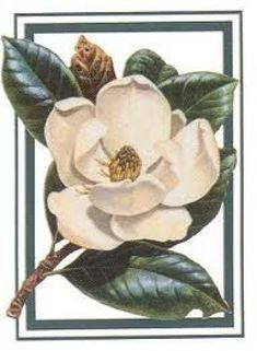 Steel Magnolia: The essence of strength combined with femininity. Magnolia Paint, Magnolia Flower, Magnolia Branch, Flor Tattoo, Schulter Tattoo, Flower Meanings, China Painting, Vintage Flowers, Flower Art