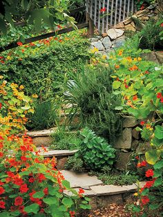 Create a curving staircase with switchbacks that minimize the steepness of the slope by permitting wide treads on each step. Trailing nasturtiums disguise the severity of the slope and add visual appeal. So stunning!!