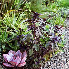 More purples & succulents