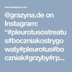 "@grazyna.de on Instagram: ""#pleurotusostreatus#boczniakostrygowaty#pleurotus#boczniak#grzyby#гриб#grzyb#setas#mushrooms#hongos#fungi#funghi#fungilove#fungifanatic#pil…"" • Instagram"