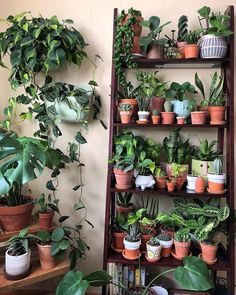 Indoor Plant Decor ideas are fun for people of all ages. You don't have to have a huge garden or your Indoor Plant Decor Ideas are perfect for small garden arrangements. There are many different plants that are suitable for… Continue Reading → Room With Plants, House Plants Decor, Potted Plants, Indoor Plants, Indoor Gardening, Indoor Plant Decor, Gardening Tips, Buy Plants, Succulent Plants
