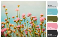 Pink Moment (SW 6857) is the perfect paint color for this pink meadow.