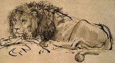 A Lion Laying Down, Rembrandt