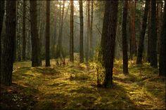 Kampinoski National Park (Fall+colors winter trees ). Photo by renifer