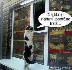 Dla ludzi o ponad przeciętnym poczuciu humoru ;-) <br />śmieszne obrazki z opisami, śmieszne filmy , humor dnia , ruchome gify , demotywatory na FB dla dorosłych , śmieszne koty na fejsa , smieszne kawały , śmieszne zdięcia memy facebook ,śmieszne teksty Best Memes, Funny Memes, Good Mood, Carpe Diem, Techno, Funny Cats, Haha, Dog Cat, Dogs