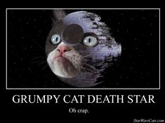 Pictures of hover cat star wars - Grump Cat, Grumpy Cat Meme, Grumpy Cat Quotes, Cat Jokes, Funny Cat Memes, Funny Cats, Grumpy Kitty, Funny Captions, Kitty Kitty