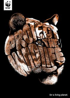 WWF - Protect the Wildlife - Tiger