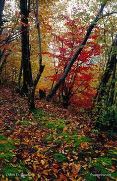 Forêt en Iran - Oshin D. Zakarian