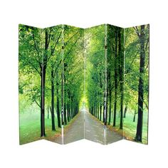 Separate large rooms with this stunning canvas room divider. With eye-catching nature photographs on each side of the canvas, this room divider features a folding screen design for easy placement. Room Divider Screen, Room Screen, Folding Room Dividers, Folding Screens, Privacy Screens, Decorative Screens, Aesthetic Look, Oriental Furniture, Antique Furniture