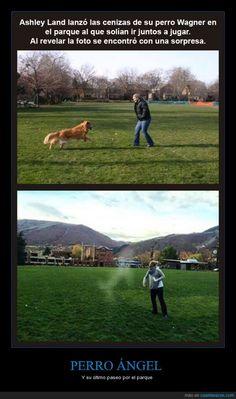 PERRO ÁNGEL - Y su último paseo por el parque   Gracias a http://www.cuantarazon.com/   Si quieres leer la noticia completa visita: http://www.estoy-aburrido.com/perro-angel-y-su-ultimo-paseo-por-el-parque/