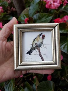 Tiny Goldfinch Giclée Print Black Wings, Goldfinch, North Africa, Bird Prints, Printing Process, Giclee Print, Watercolor Paintings, Digital Prints, Fine Art