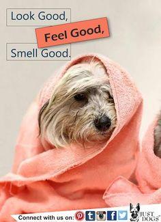 #FeelFresh #Spa #Dogs #JustDogs #Spalon #Beattheheat