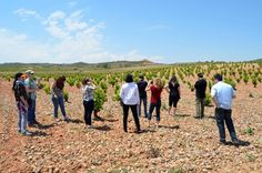 American Sumillers and journalists. Discovering the next great Grape, The Cariñena's Garnacha.