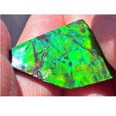 Ammolite Natural Polished Loose Stone Freeform 27HPLS$129.99#ammolite #korite #ammonite #fengshui #canada #canadagems #canadianammolite #gemstones #jewelry #jewelryaddict #photooftheday #jewelryoftheday #jewelrygram #colorful #gem #gems #opal #minerals #natureinspired #rainbow #alberta #fossil #Alaska #followersofinstagram #isellrocks #art #handmade #lapidary #madeinmontana #ammolitestone Ammonite, Feng Shui, Alaska, Fossil, Minerals, Cuff Bracelets, Opal, Polish, Canada