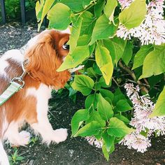 We love a pup who makes time to stop and smell the flowers. (Photo credit: @king_remington)