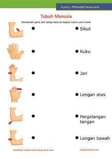 lembar belajar anak SD/TK, mengenal dan membaca nama anggota bagian badan, tubuh (tangan) manusia