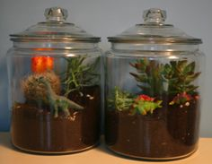 Google Image Result for http://www.alphamom.com/legacy/last-weekend/how_to_make_a_terrarium_1.png