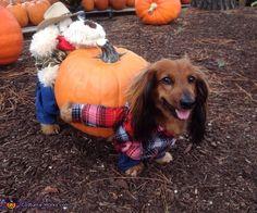Great Pumpkin Harvest - 2013 Halloween Costume Contest via @costumeworks