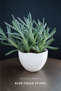 Room For Tuesday. Favorite Indoor Houseplants. Blue chalk stick