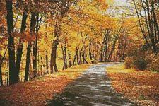 Path Through Autumn Trees - Cross Stitch Chart