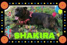 Hoy Cumpleaños Shakira le deseamos muchos mimos y chuches 🎉🎈🎂💞