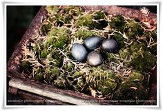 Rust, moss and stone eggs