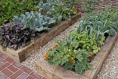 Raised Vegetable Gardens, Vegetable Garden For Beginners, Starting A Vegetable Garden, Gardening For Beginners, Vegetable Gardening, Tomato Companion Plants, Companion Planting, Raised Bed Garden Design, Pot Jardin