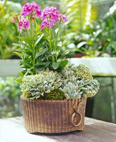 Interesting Planter and Plantings
