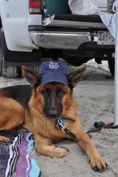"""Gunner (the German Shepherd) is on """"Island Time""""!  photo by Sheri Ryan. www.OcracokeIslandRealty.com"""