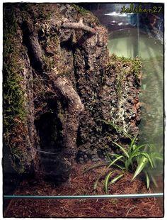 tarantula enclosure ideas - Google Search