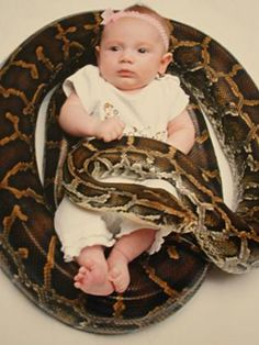 I don't care what anyone says, not all snakes are dangerous. My snakes are the biggest sweethearts ever. My pomeranian was more dangerous than my snakes.    I would love to have a baby picture like this. My child will grow up around snakes and reptile.    SAID THE DUMBEST PERSON EVER!
