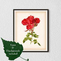 Rose art, Wall print, Rose print, Rose vintage illustration, Antique rose print, Flower printable, Instant download art, Rose printable, #46