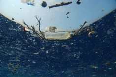 "The USA film ""A Plastic Ocean"" instead explores the environmental disaster generated by plastic in the oceans, and here we're not talking about just bags and objects but tiny pieces of plastic posing a threat to our marine environment."