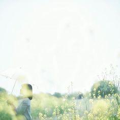 4\23.2016 . お空いっぱい . . #filmphotography #フィルム写真 #ふいるむ寫眞 . . 余白のある写真が好き でもお花撮ると ついつい余白がなくなってしまうw