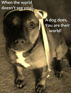 Pit Bull Dogs I try my absolute best to treat my fur babies the best i can. bcuz im all for them I Love Dogs, Puppy Love, Cute Dogs, Animals And Pets, Funny Animals, Cute Animals, Large Animals, Beautiful Dogs, Animals Beautiful
